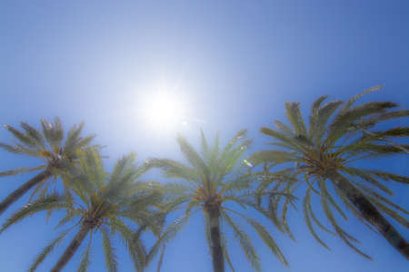 Bright sun with starry rays shines above palm trees on clear blue sky, global warming, vacation or freedom concept Stock Photo - 123892633