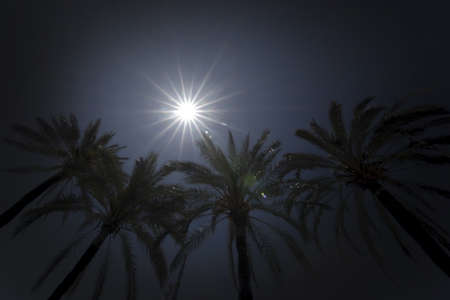 Bright sun with starry rays shines above palm trees on clear blue sky, global warming, vacation or freedom concept Stock Photo - 123892635