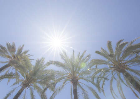 Bright sun with starry rays shines above palm trees on clear blue sky, global warming, vacation or freedom concept Stock Photo - 123892642