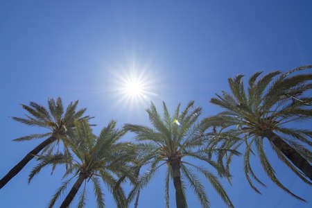 Bright sun with starry rays shines above palm trees on clear blue sky, global warming, vacation or freedom concept