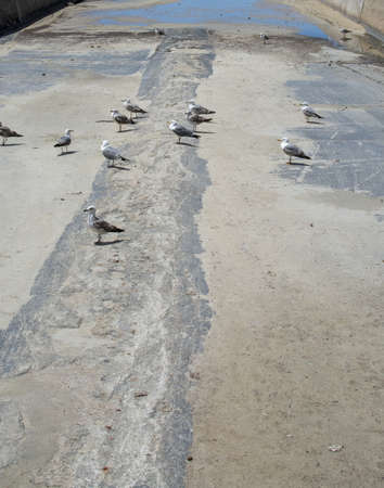 Dry concrete drainage canal with birds and Mediterranean sea in Mallorca, Spain. 写真素材