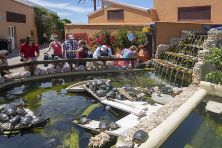 PALMA, MALLORCA, SPAIN - MAY 22, 2019: Visitors watching turtles in pond on Marineland on May 22, 2019 in Palma, Mallorca, Spain.