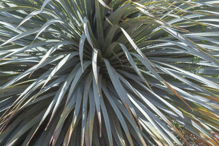 Aloe leaves macro closeup abstract texture