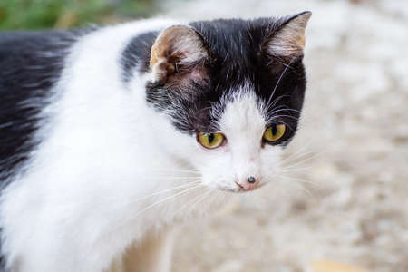 tele up: White stray cat with black spots and incredible green eyes