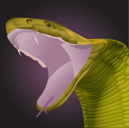 Vector illustration of a green skinned snake with mouth wide open showing fangs
