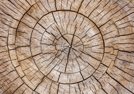 Wood background. Stump of tree felled - section of the trunk with annual rings Stockfoto