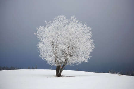 frosted tree in January Stock Photo