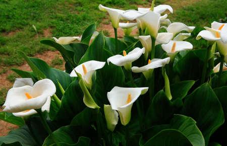 pistil: gladiolus bloom on the river in the spring Stock Photo