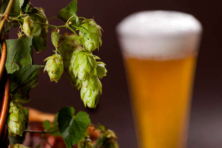 brewery: fresh aromatic hops and beer