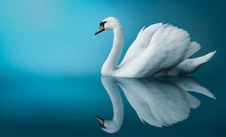 Fantastic swan photo