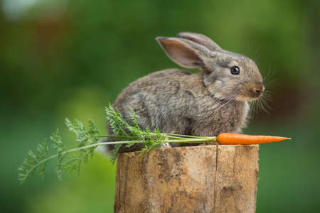 Portrait of cute baby rabbit bunny on stud whith carrot agaist green bokeh background