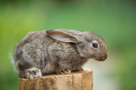 stud: Portrait of cute baby rabbit bunny on stud agaist green bokeh background