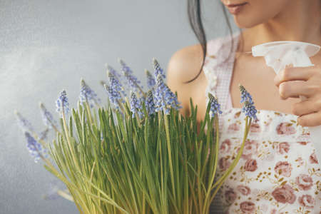 Beautiful young womanwatering spring flowers in flowerpot. Female florist with Mouse Hyacinth Muscari in hands. Houseplant close-up Reklamní fotografie