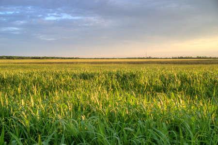 green field and sun sky Stock Photo - 7863369
