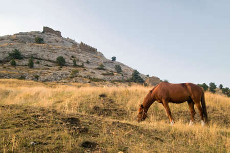 loophole: horse in the field and the wall of an ancient castle