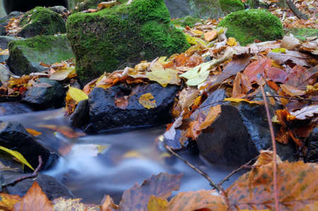 stream flowing among stones covered with plants and leaves photo