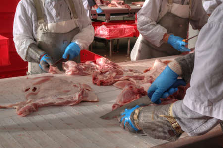 close up of meat processing in food industry photo