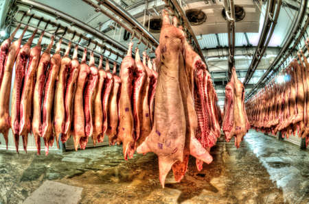 Fresh meat pigs in a cold cut factory photo