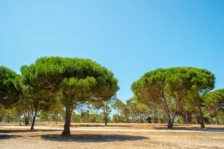 portugal agriculture: Beautiful miraculous plantations of cork oak tree