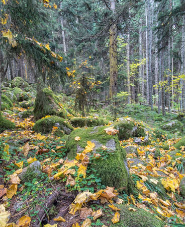 dense forest: Beautiful dense forest on a sunny day. Russia, North Caucasus Stock Photo