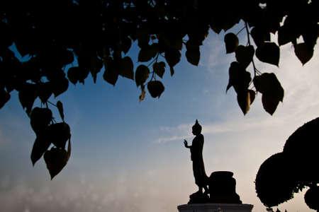 Buddha statue Sacred Fig Tree