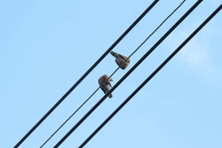 Couple bird on wire in blue sky day, Pigeons, The Lover Concept photo