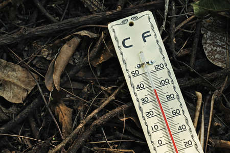 extreme heat: Hot weather, Thermometer on dry leaves ground, Thermometer in high temperature,  Temperature scale  Stock Photo