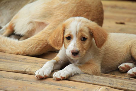 A close-up of cute puppy. Lonely puppy. Stock Photo
