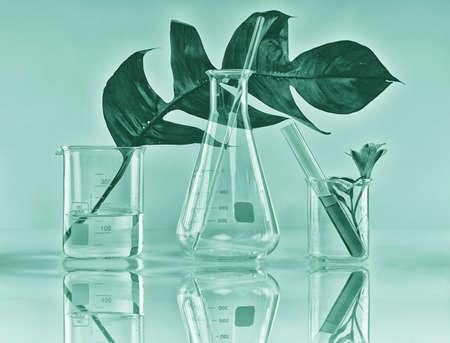 Botánica orgánica natural y cristalería científica, medicina alternativa de la hierba, productos naturales de la belleza del cuidado de la piel, concepto de la investigación y del desarrollo. Foto de archivo
