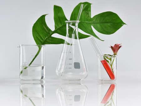 天然有機植物と実験用ガラス器具、代替ハーブ医学、自然のスキンケア美容製品、研究開発のコンセプト。 写真素材 - 81307705