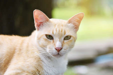 doze: Lazy street cat at outdoor. Stock Photo