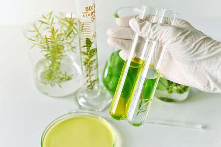 material de vidrio: El desarrollo de la medicina natural en el laboratorio, el científico investiga y experimenta la extracción herbaria verde.