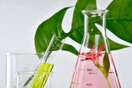 Natural organic extraction and green herbal leaves, Flower aroma essence solution in laboratory.  Archivio Fotografico