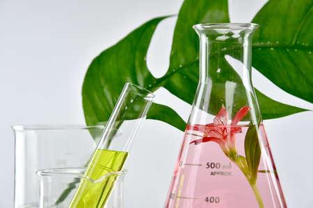 Extracción orgánica natural y hojas de hierbas verdes, Solución de esencia de aroma de flores en laboratorio. Foto de archivo