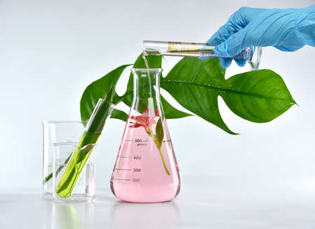 Wetenschapper die natuurlijke organische extractie en groene kruidenbladeren, de geuroplossing van de Bloemaroma in laboratorium mengt.
