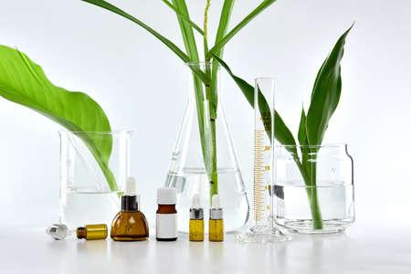 Envases de botellas de cosméticos con hojas de hierbas verdes y cristalería científica, paquete de etiqueta en blanco para la marca de maqueta, investigación y desarrollar concepto de producto de cuidado de belleza natural orgánica belleza. Foto de archivo