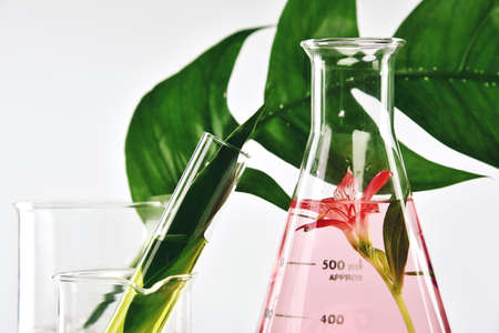 Natural organic extraction and green herbal leaves, Flower aroma essence solution in laboratory.  Imagens