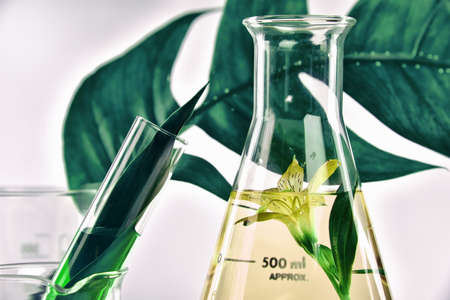 Natural organic extraction and green herbal leaves, Flower aroma essence solution in laboratory. Banque d'images