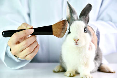 Cosmetics test on rabbit animal, Scientist or pharmacist do research chemical ingredients test on animal in laboratory, Cruelty free and stop animal abuse concept.