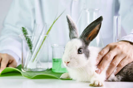 formulate: Medicine research and testing in rabbit animal, Natural organic herbal extraction medicine, Safety chemical, Drug or pharmaceutical research and development concept. Stock Photo