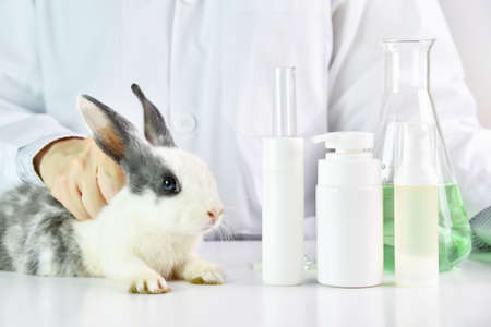 Scientist testing on rabbit animal in chemical laboratory, Cruelty free cosmetics beauty product concept.