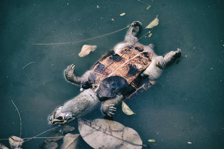 Pollution problem, Dead turtle in toxic water, Contaminated environmental.