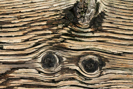 Wooden texture background, Old brown rustic surface of wood board pattern panel with copy space for design template.