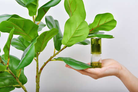 Hand holding natural skincare bottle, Cosmetic bottle containers packaging with pure green plant essence, Organic beauty product concept.