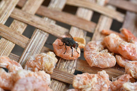 Fly on dry shrimp food, Flies spreading germ outbreak, Dirty food is bad hygienic condition cause diarrhea disease.