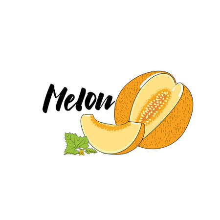 Vector simple isolated image of a melon