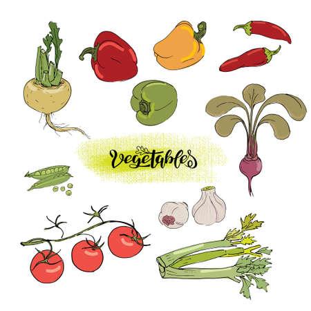 Set of vegetables in sketch style Vetores