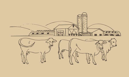 agricultural farm, agri business with cows