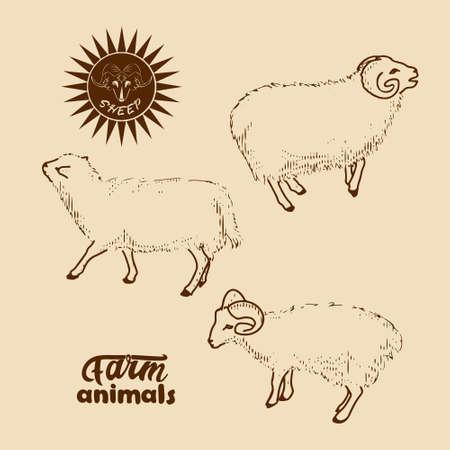 Set of sheep images