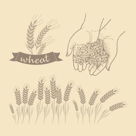 Grain in the palms Vettoriali